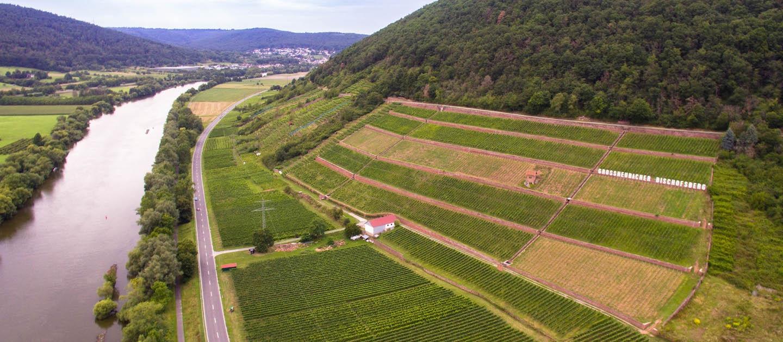 Weingut-Kremer-Bischofsberg-1440x630.jpg